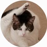 Anoka, Champlin, MN cat sitter